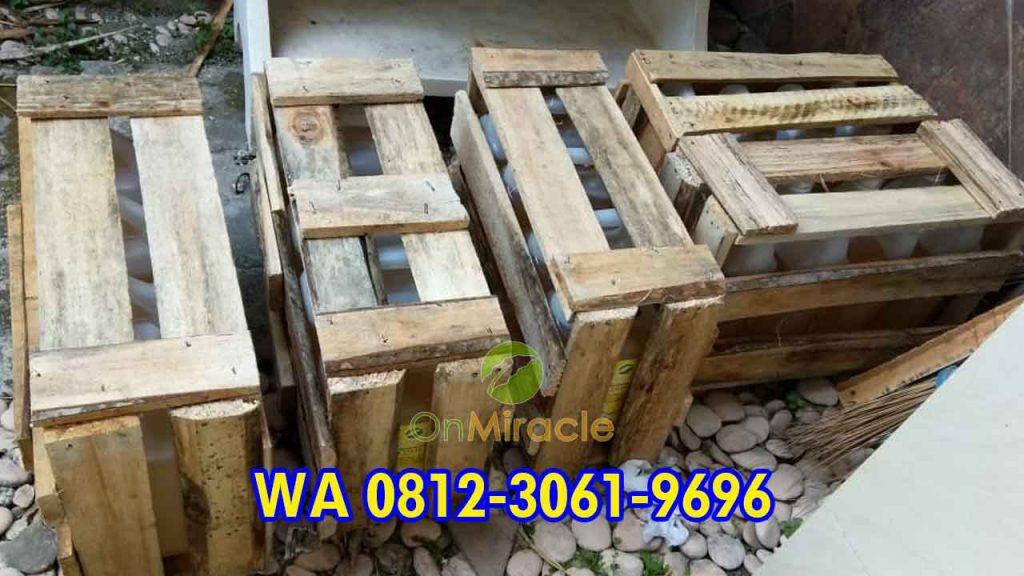 WA 081230619696, Pabrik Minyak Kemiri Curah Murni, Agen Resmi Minyak Kemiri Literan Murah