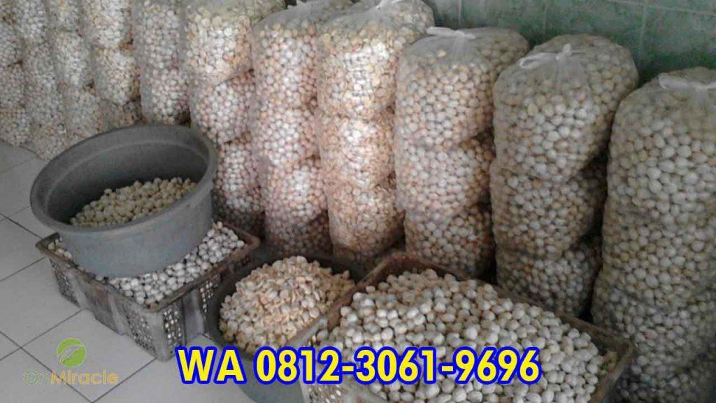 WA 081230619696, Pembuat Minyak Kemiri Curah, Penjual Minyak Kemiri Satu Liter Super